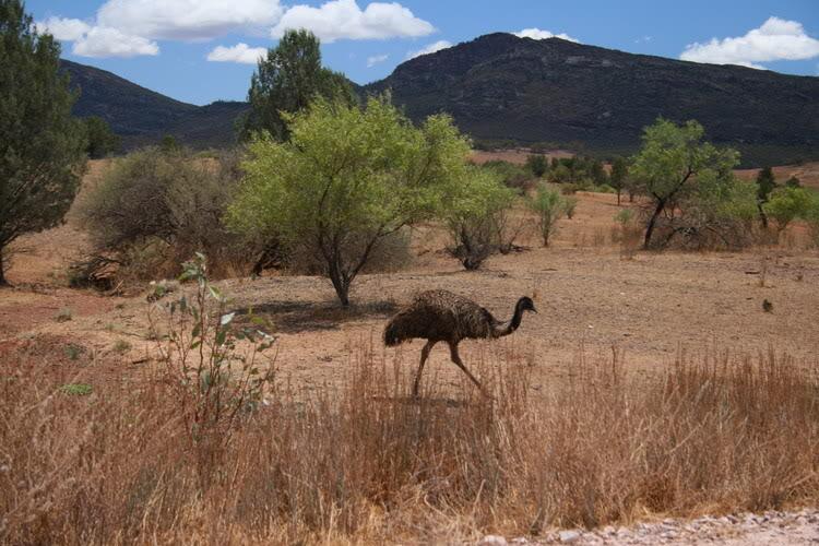 Emu3.jpg