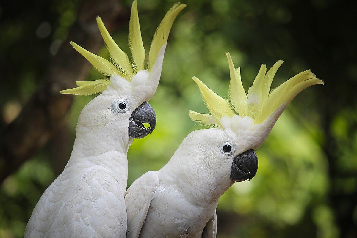 nature-bird-wing-white-view-wildlife-1084387-pxhere.com.jpg